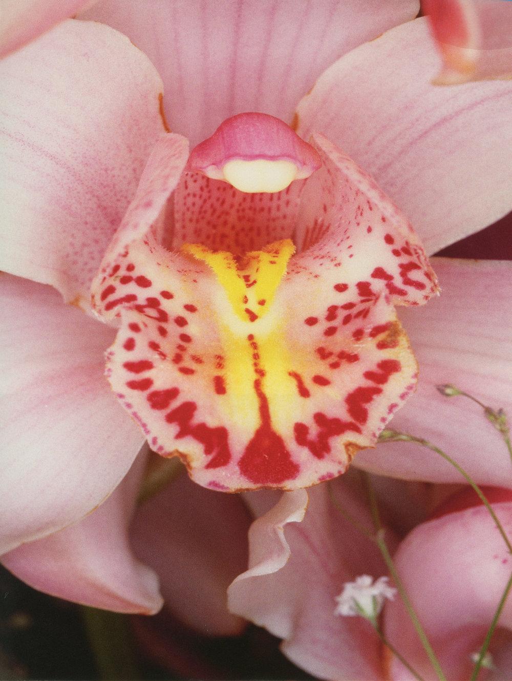 © Nobuyoshi Araki, Flowers, 1985  Courtesy of Private Collection.