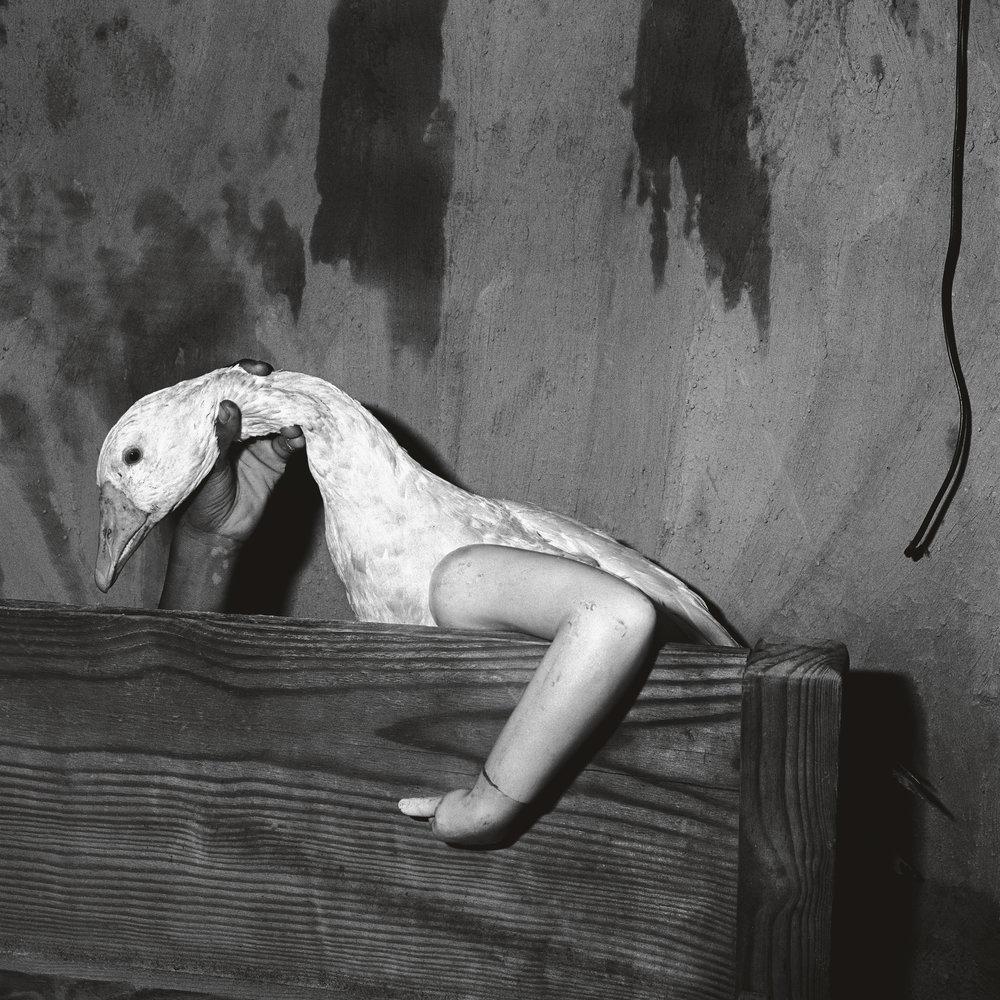 One Arm Goose , 2004  © 2017 Roger Ballen