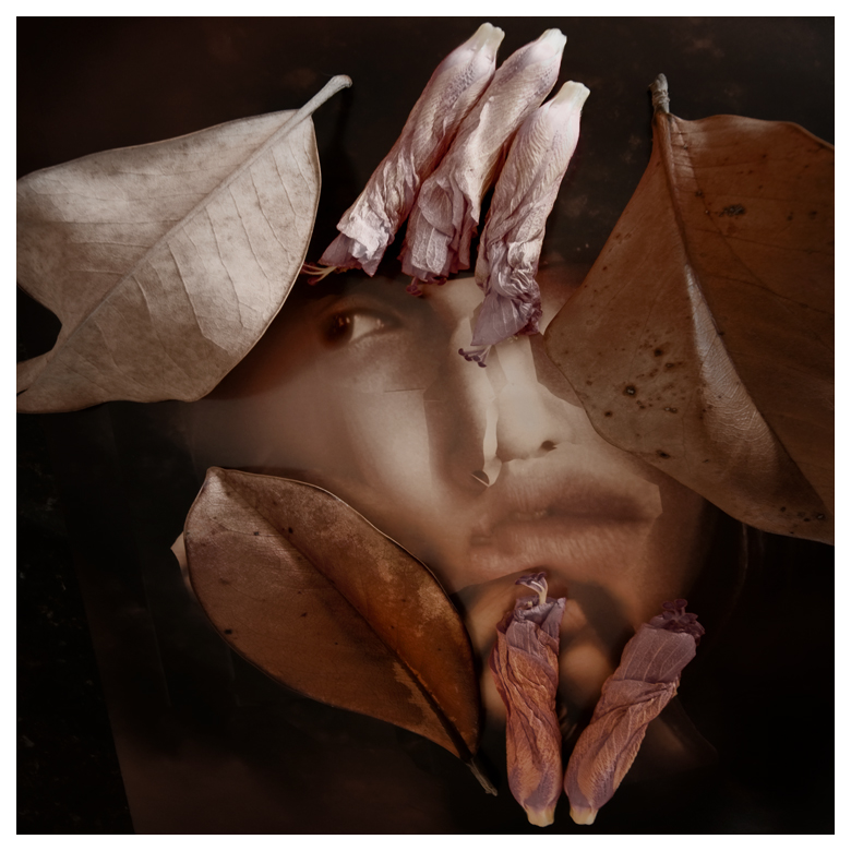 With Certain Petals and Leaves © Carole Usdan