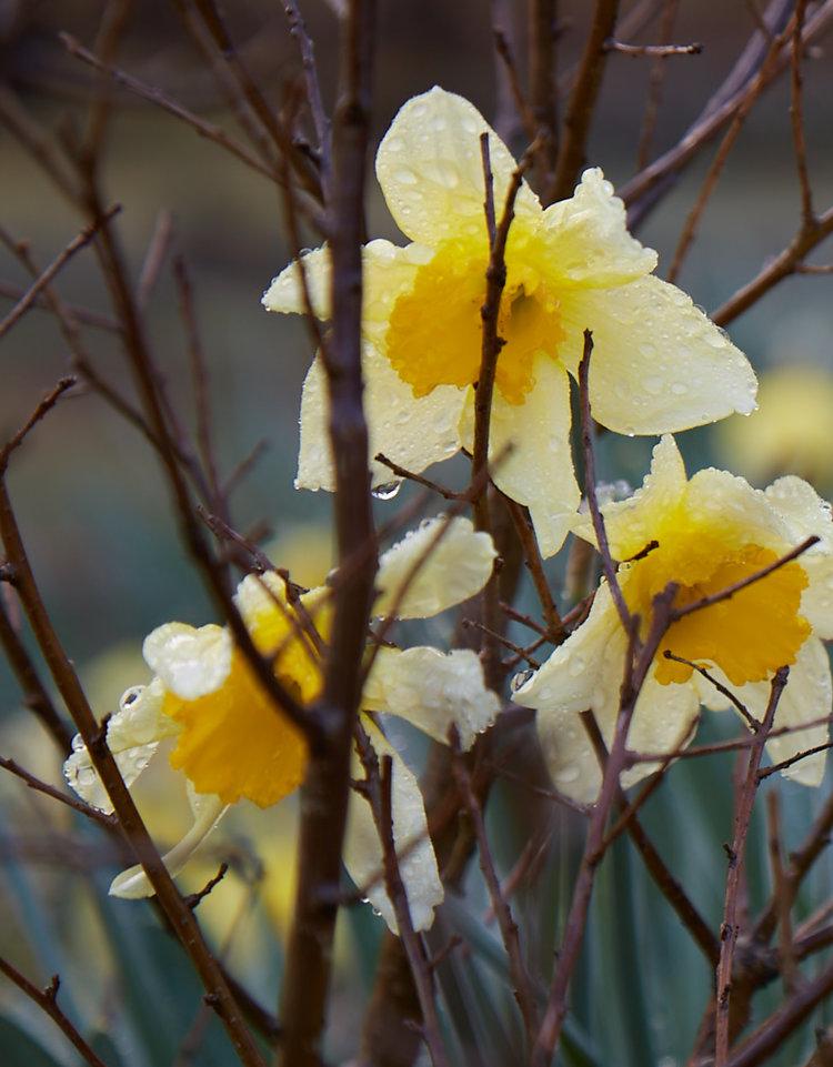 Spring #1