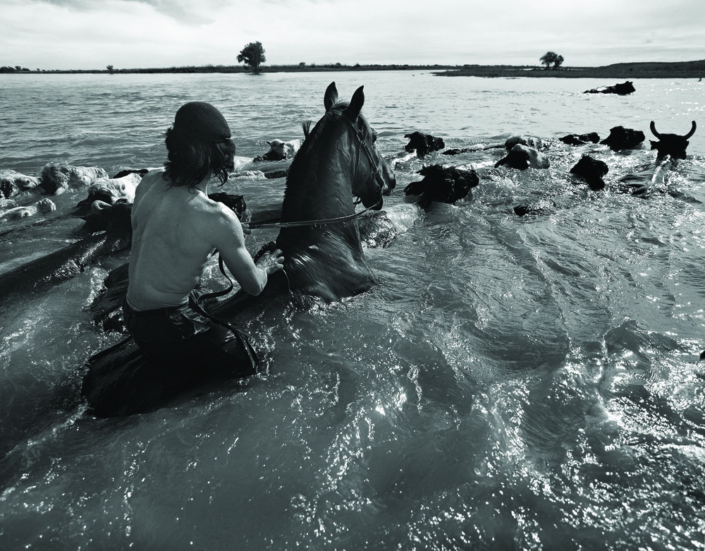 Moving a herd of cattle from an island, Diamante, Entre Rios Province.Photo by ©Aldo Sessa.