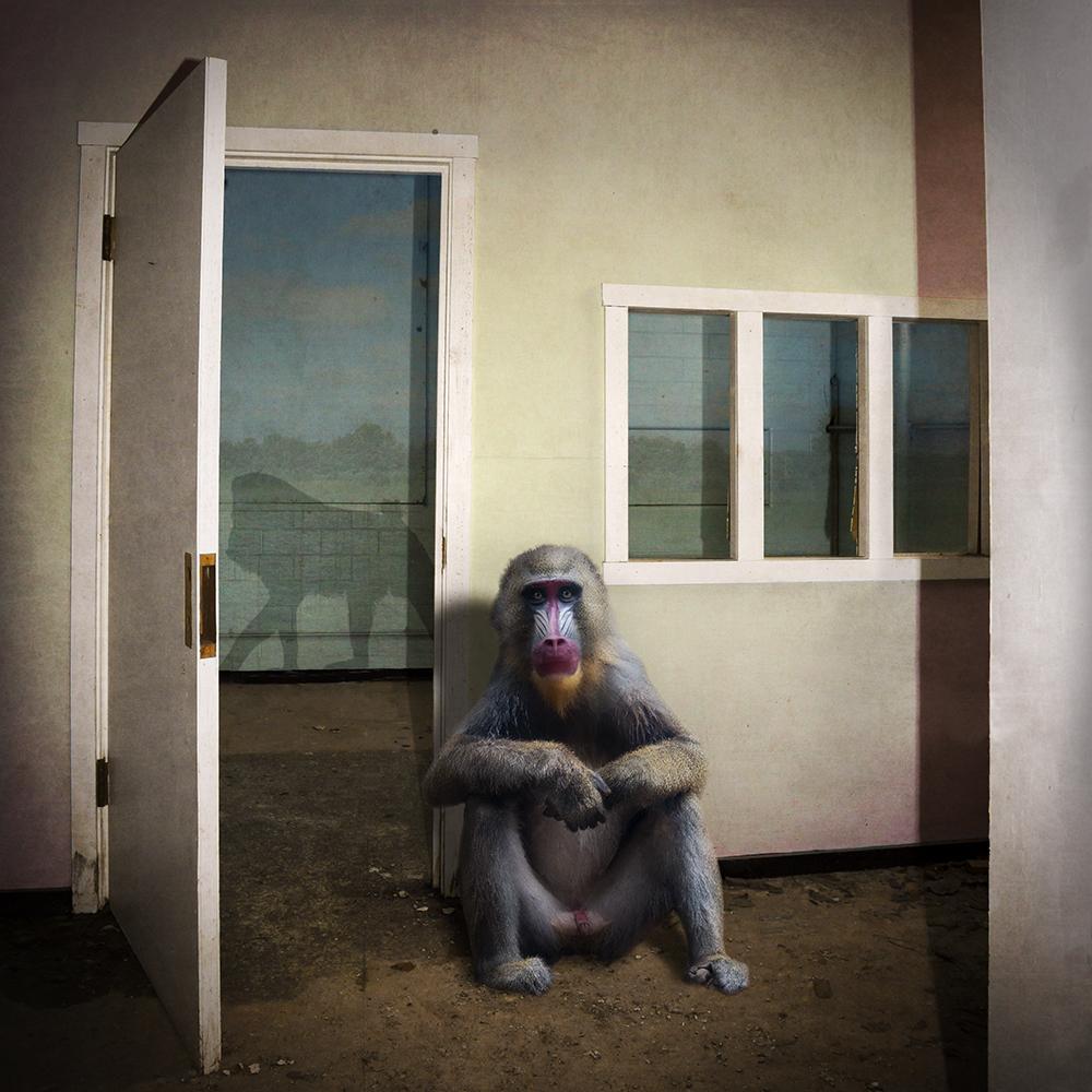 Solitary © Carol Erb