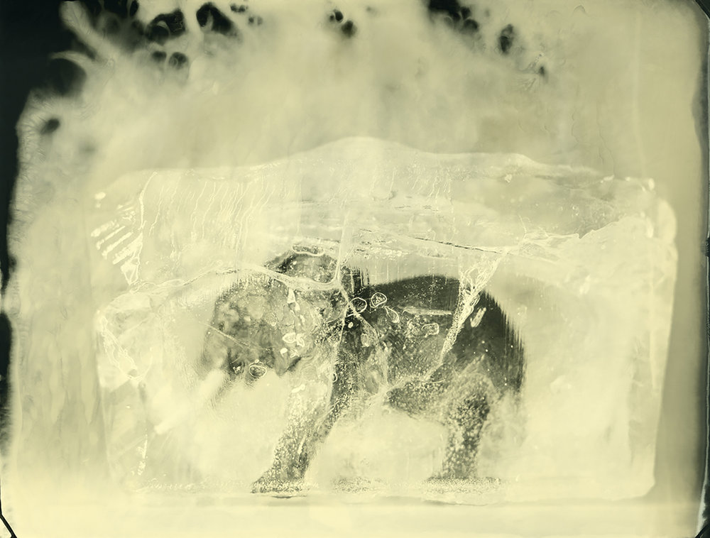 Asian Elephant © Erik Hijweege