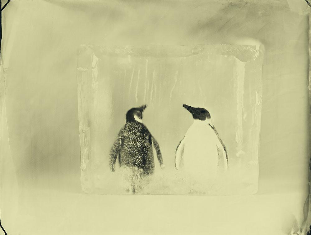 Emperor Penguins © Erik Hijweege