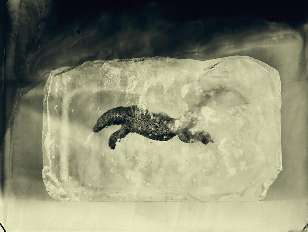 Komodo Dragon © Erik Hijweege