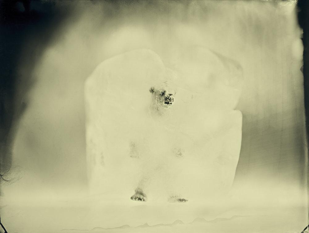 Polar Bear © Erik Hijweege
