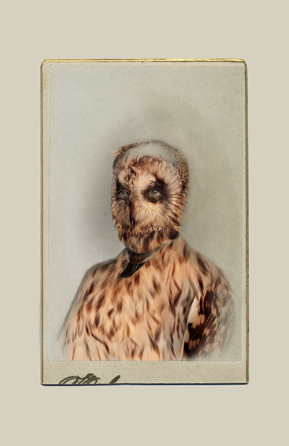Aviary © Sara Angelucci   Short-eared Owl/endangered , 2013 C-print, 22 x 33.5 inches