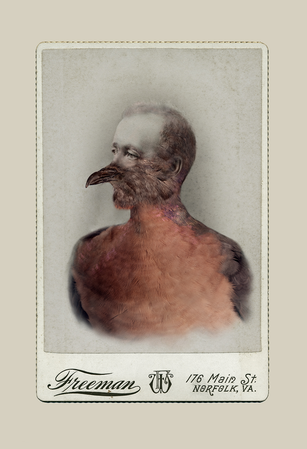 Aviary © Sara Angelucci   Male Passenger Pigeon/extinct , 2013 C-print, 26 x 38 inches