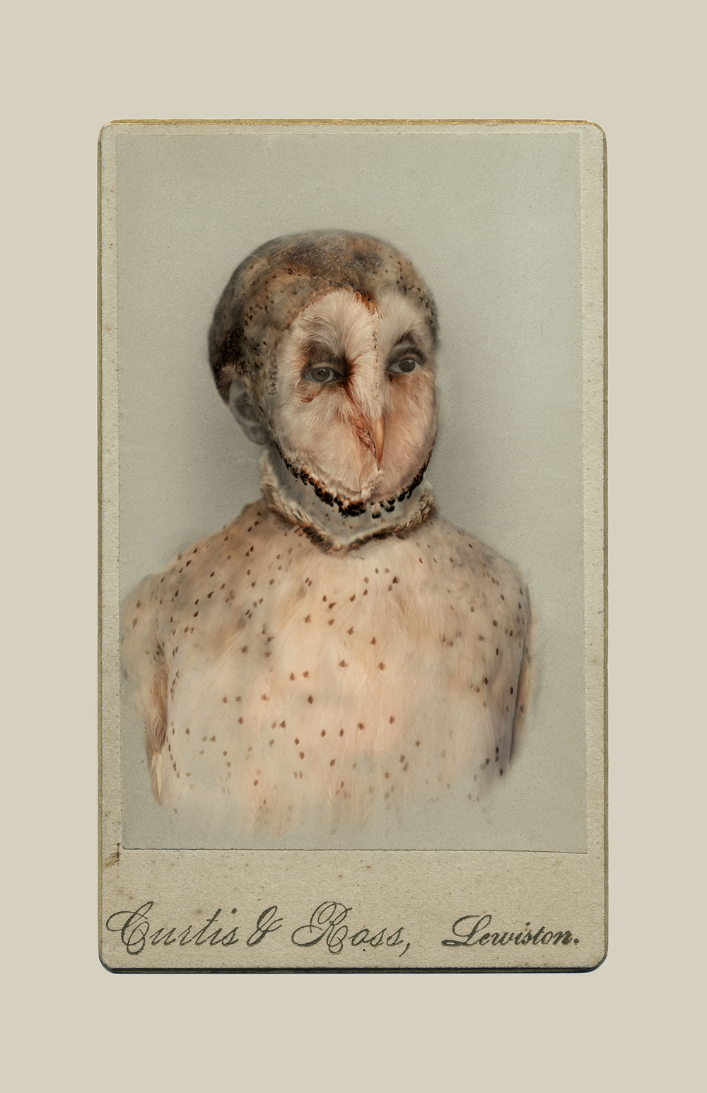 Aviary © Sara Angelucci   Barn Owl/endangered , 2013 C-print, 22 x 33.5 inches