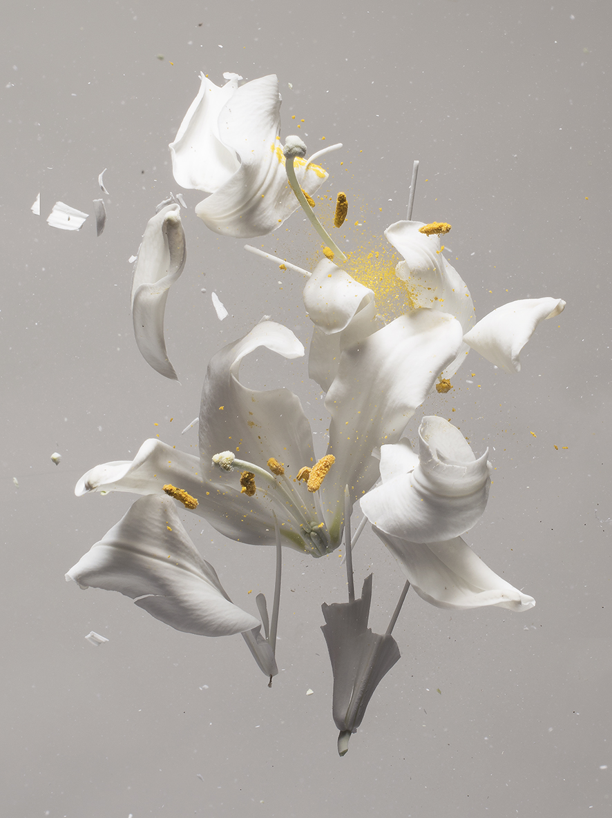 """Lilium Candidum D 01"", 2018  Copyright Ori Gersht. Courtesy of the artist and Yancey Richardson."