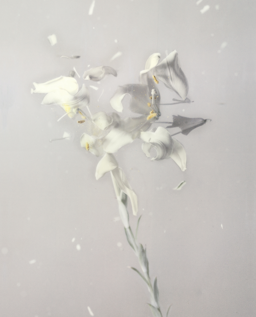 """Lilium Candidum P 01"", 2018  Copyright Ori Gersht. Courtesy of the artist and Yancey Richardson."