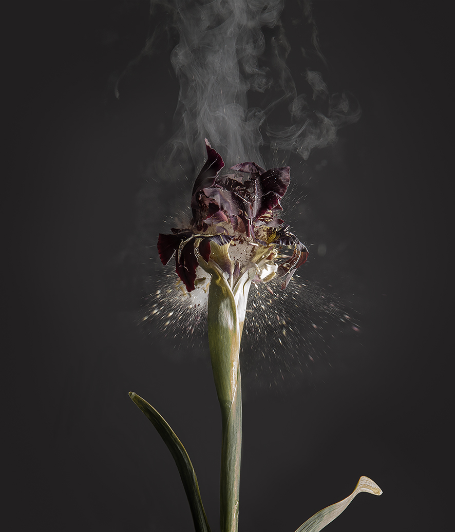 """Iris Atropurpurea D 01"", 2018  Copyright Ori Gersht. Courtesy of the artist and Yancey Richardson."
