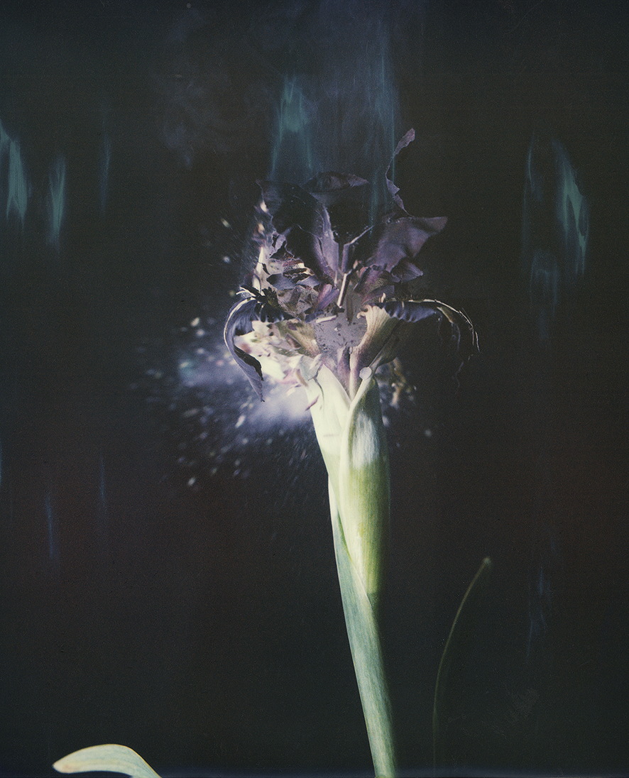 """Iris Atropurpurea 04B P"", 2018  Copyright Ori Gersht. Courtesy of the artist and Yancey Richardson."