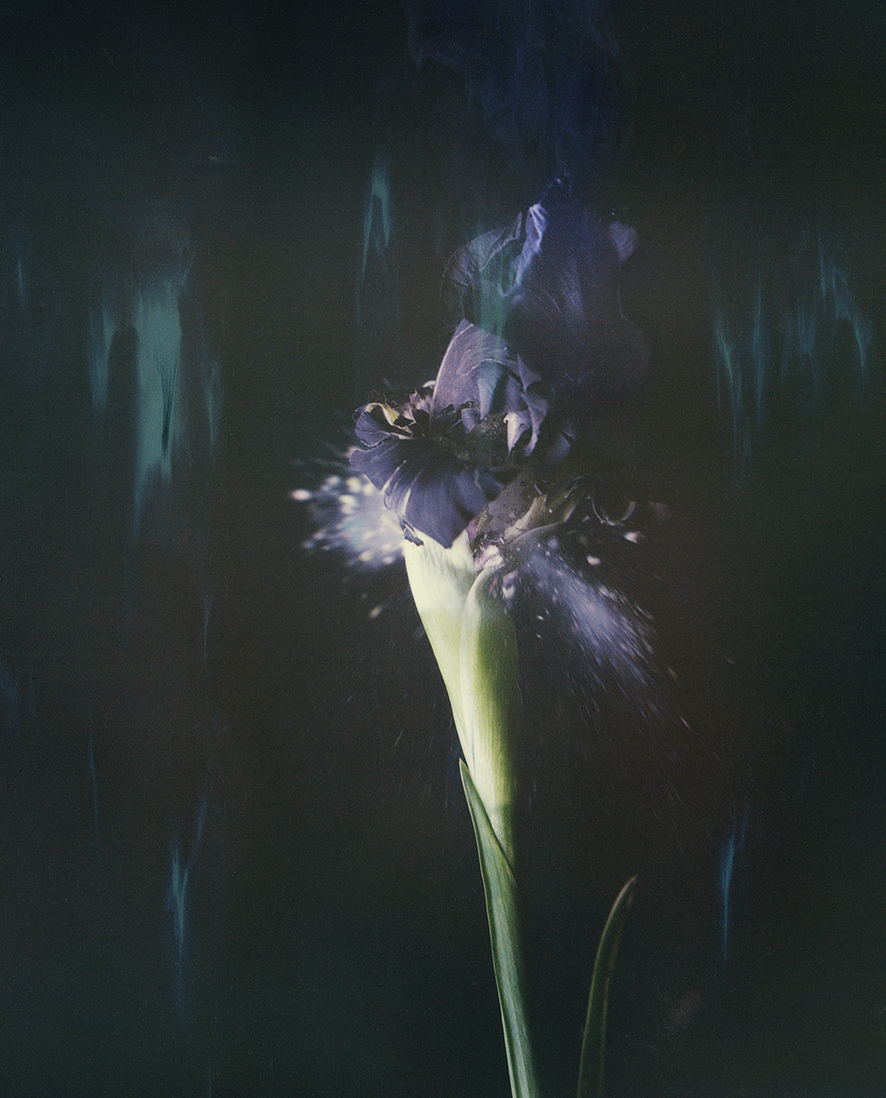 """Iris Atropurpurea 05B P"", 2018  Copyright Ori Gersht. Courtesy of the artist and Yancey Richardson."