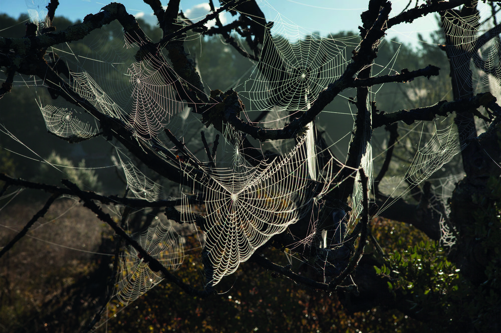 To cope with the winds, some spiders orient their webs to make them less exposed and others weave smaller webs. © Rachel Cobb. Courtesy of Damiani.
