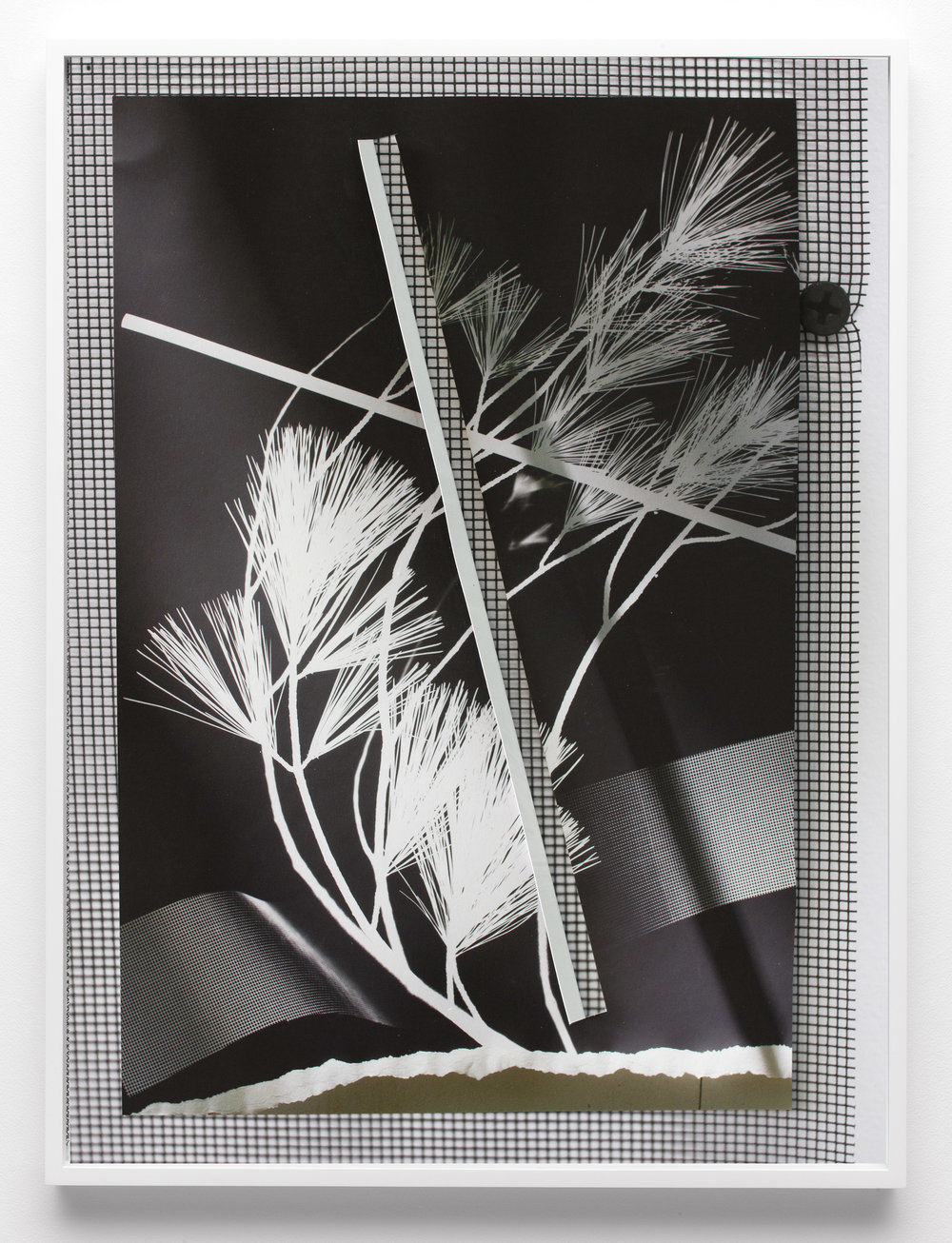 © Letha Wilson  Re-Photogram New Hampshire New York (Lung Cut Fold)