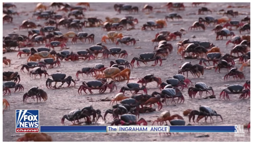 "Crabs scuttle across a beach in a final ""areal shot"" of the migrants."