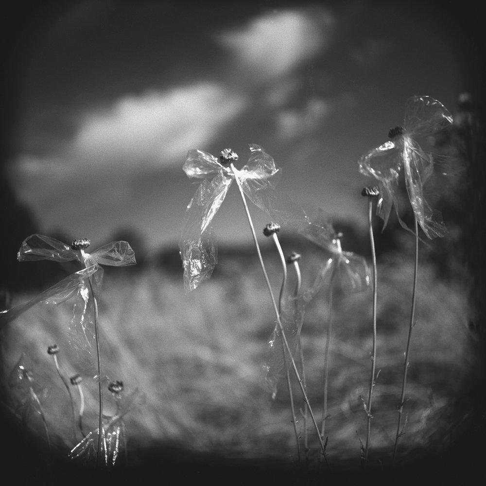©Nancy Edelstein