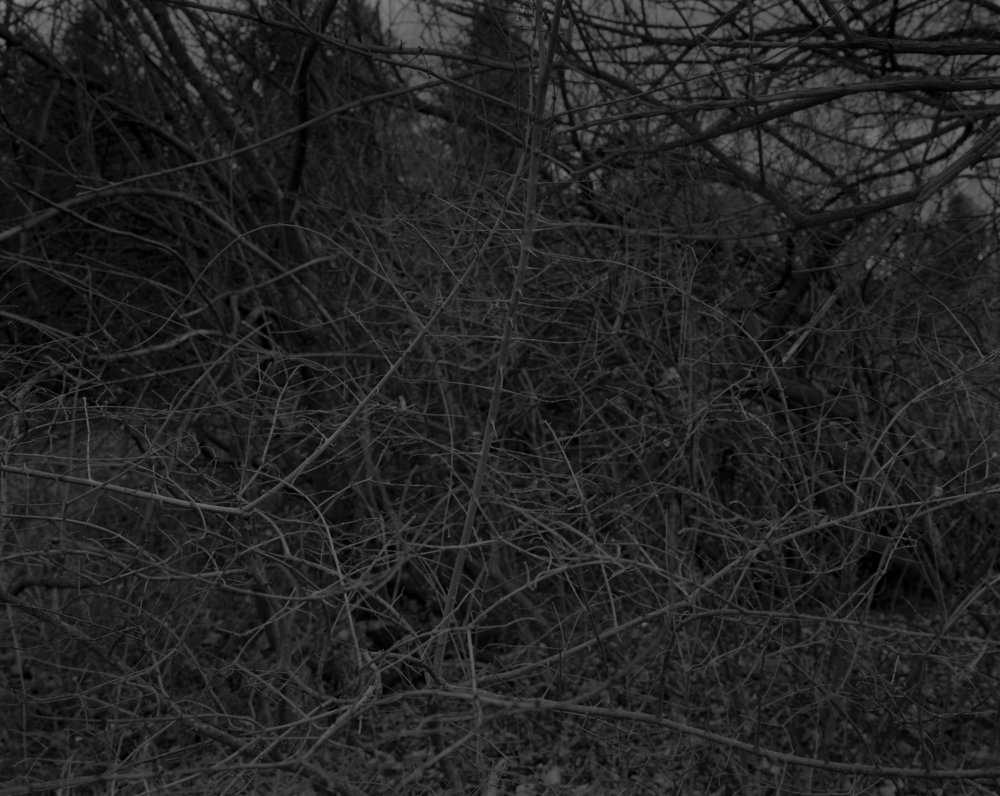 Untitled #16 (Branches with Thorns) ; from the series  Night Coming Tenderly, Black,  2017. ©Dawoud Bey. Courtesy of Mary Boone Gallery, New York