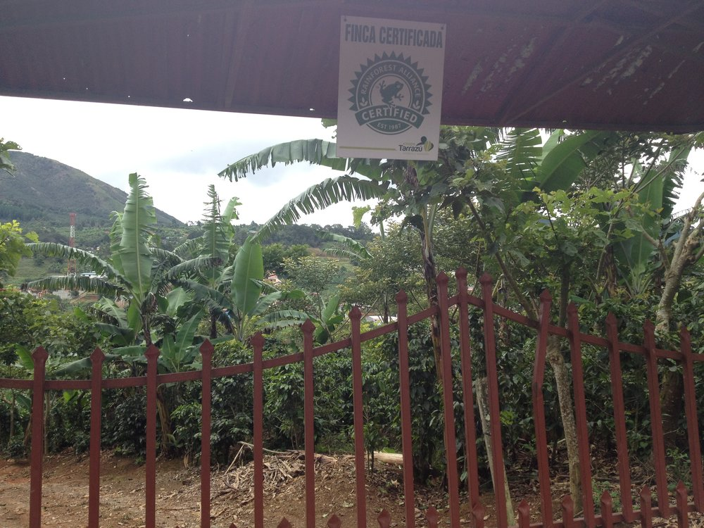 Rainforest Alliance farm