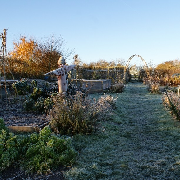 The veg patch in winter. A little forlorn, but the kale and chard are still going strong.