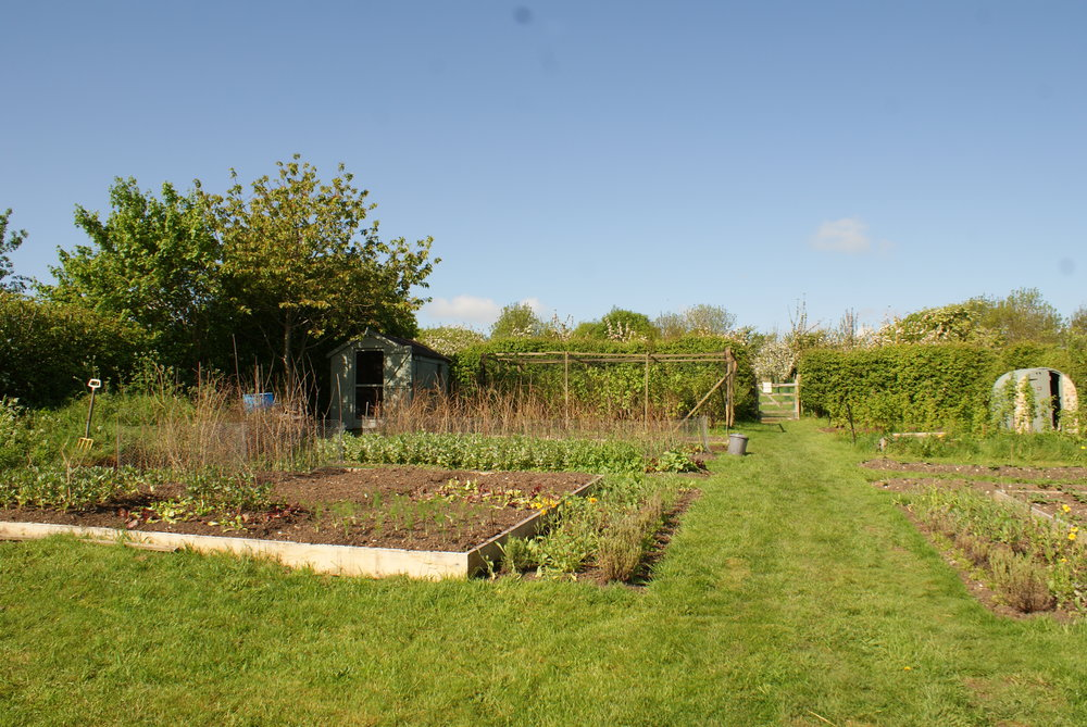 The vegetable patch in late spring / early summer.