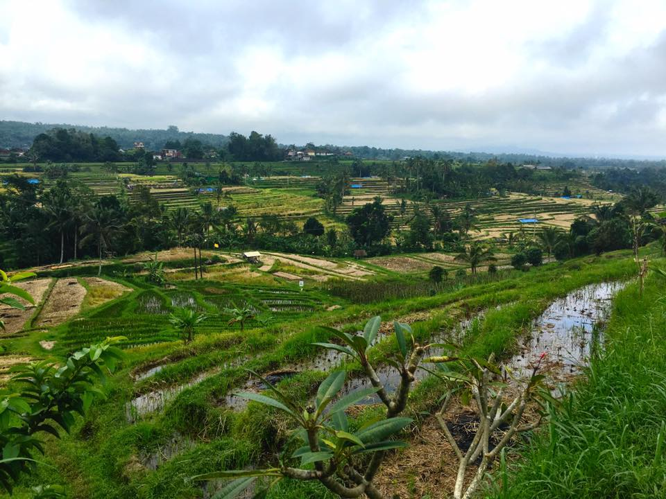 JATILUWIH RICE TERRACES: A WALK WITH THE GODS
