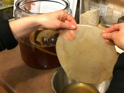 SCOBY - Symbiotic Culture of Bacteria and Yeast