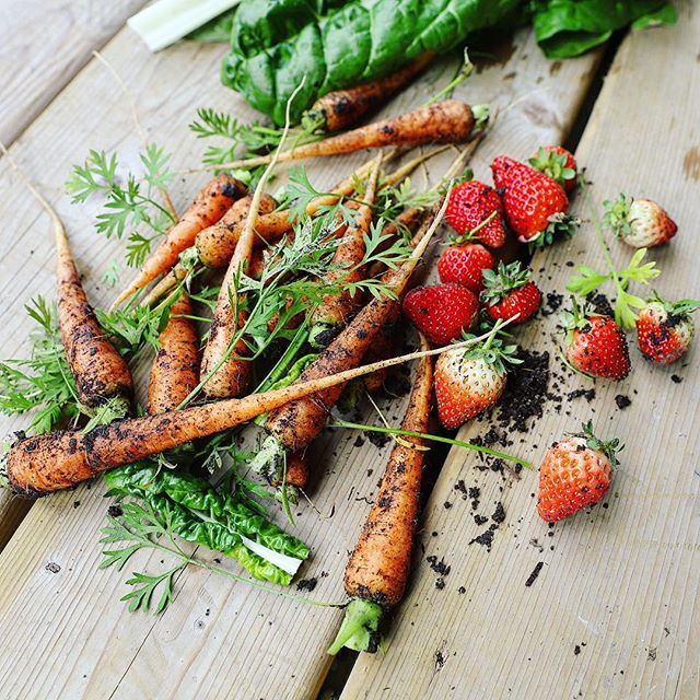 Okay guys, I'm allowed to post about garden produce because it hasn't snowed in Jasper for like 5 days... 🤞I'm off to Norway for two weeks this Friday and my garden beds will hopefully be oh-so ready for seed sowing when I get home! 🥕🍓🌱🍅 . . . #greenthumb #gardenlife #springgardening #growyourownfood #mountaingarden #springishere #springisintheair #eatrealfood #fruitandveg #nourishyourbody #registereddietitian #nutritionist #whatdietitiansdo #wholefoods #gardenveggies