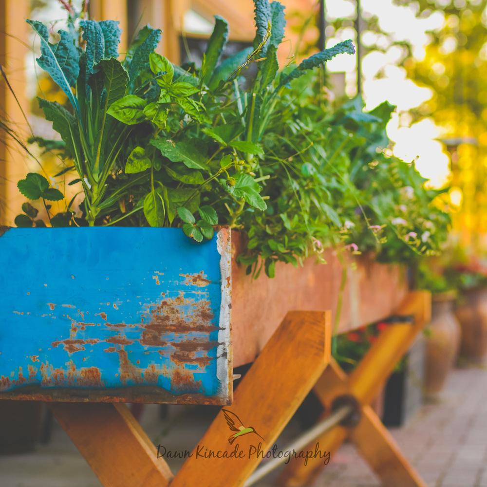 Main Street Herbs