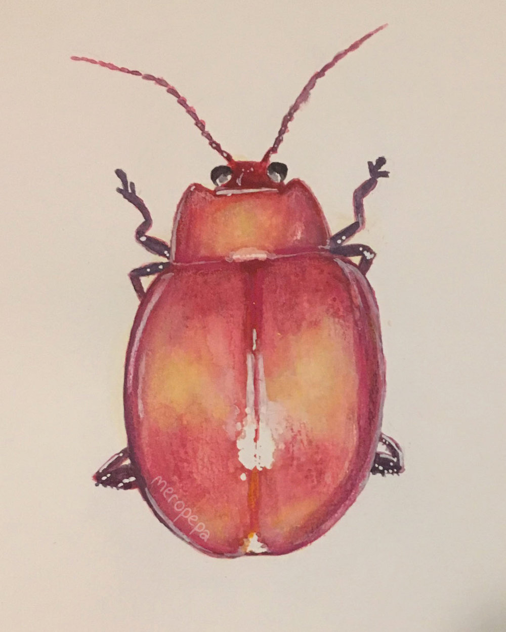 """Beetle"" 