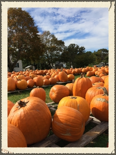 Pumpkins In Hyannis, MA