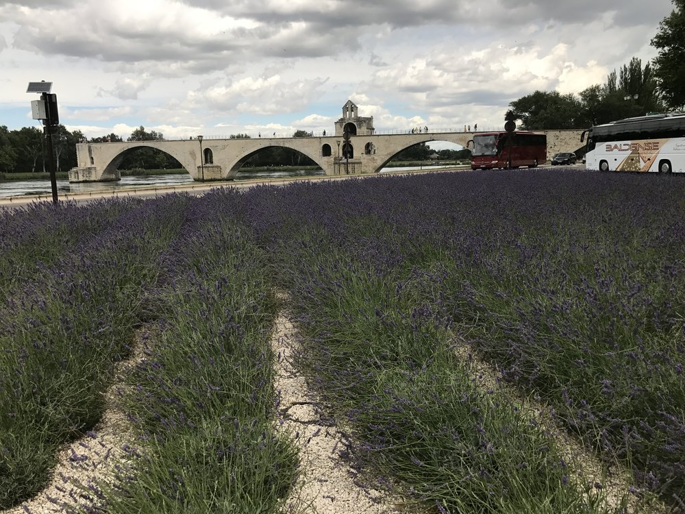 Lavender field in front of the pond d'Avignon