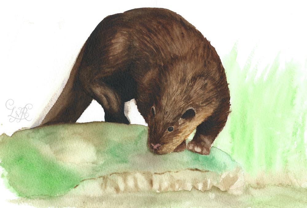 Otter Illustration-1 copy.jpg