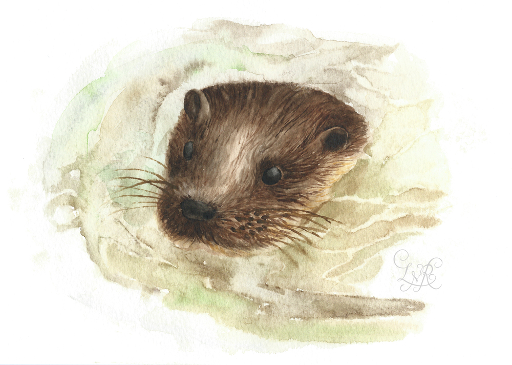 Otter Illustration-2 copy.jpg