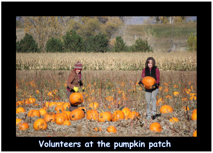 volunteers at the pumpkin patch.PNG