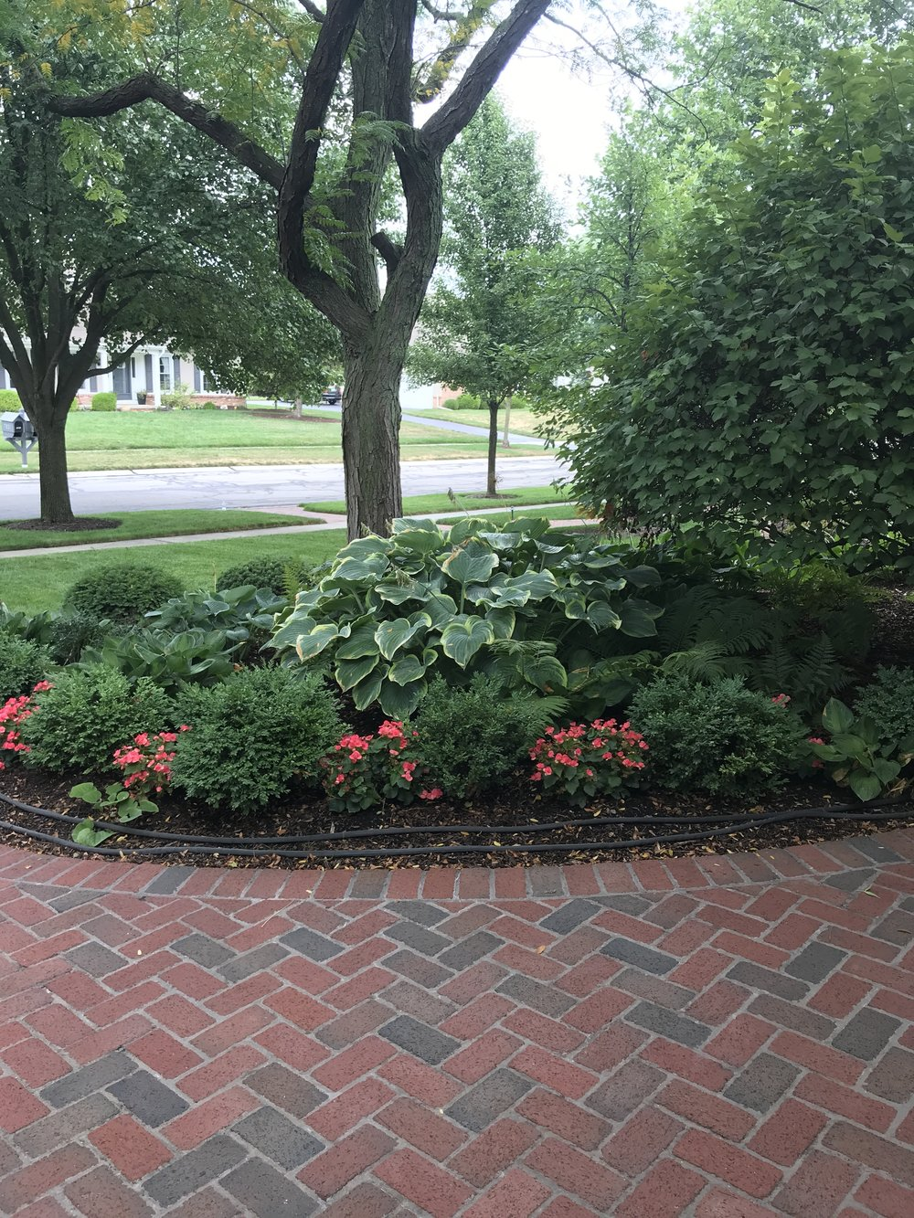 Smaller boxwood in the front and large hosta behind to create beautiful symmetry in the front of the house