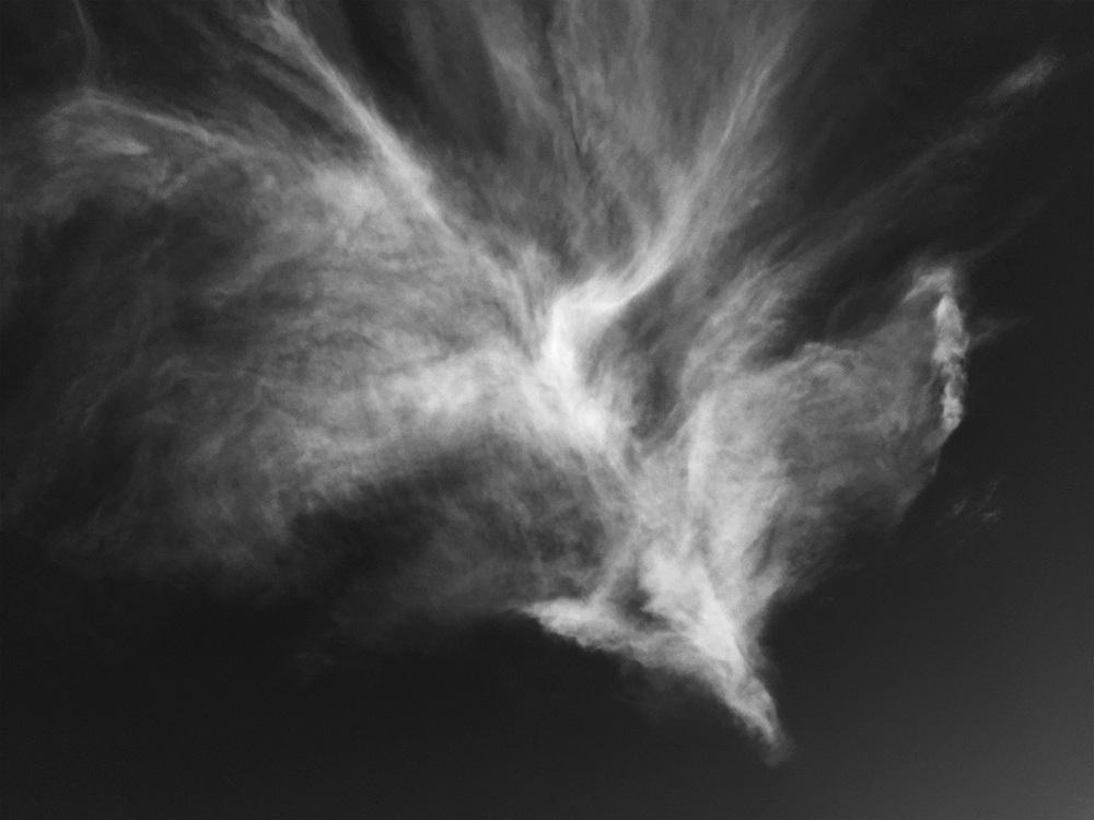 phoenix_1.jpg
