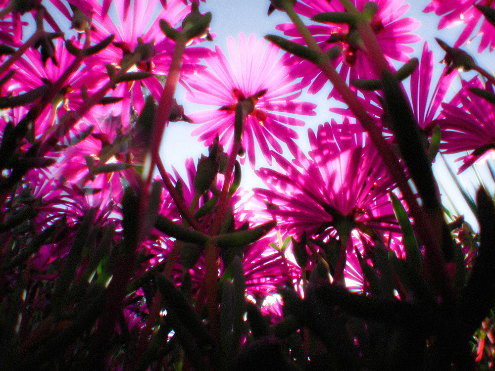 yardflowers1+pink_v2.jpg