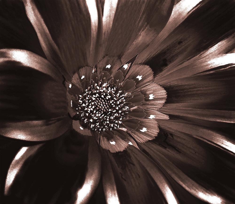 flower-+-pollenv1_6658_bw_flat.jpg
