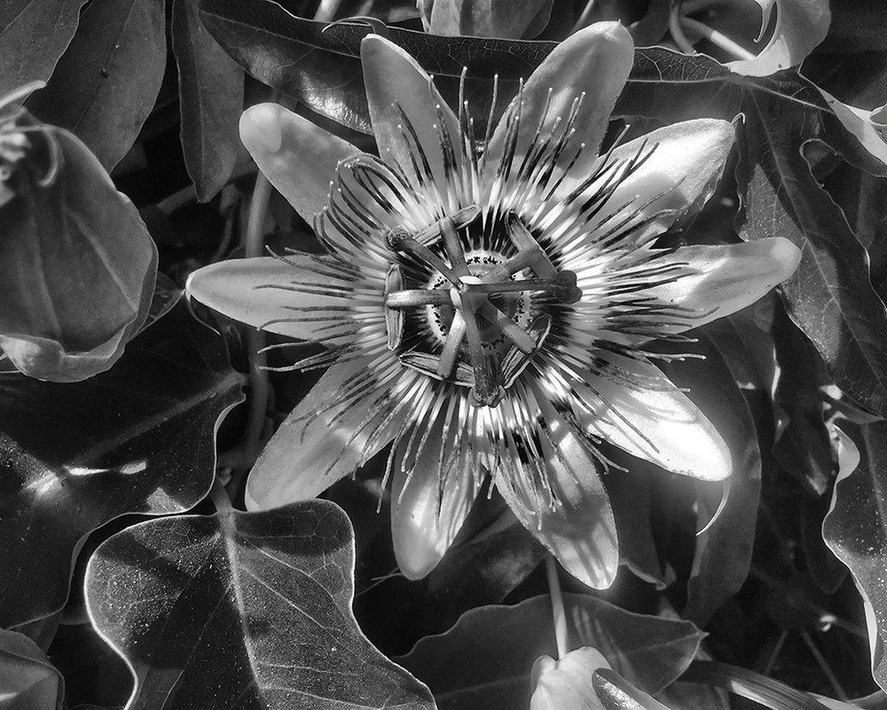 lpalmas-flower2_7101.jpg