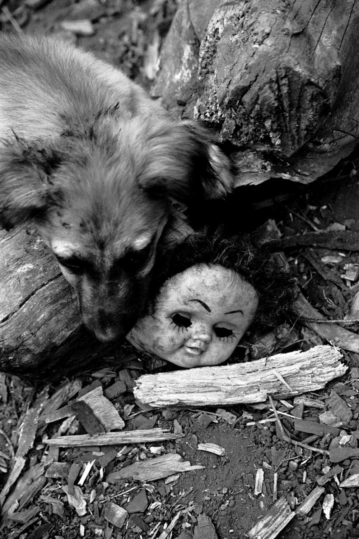 dog_mask.jpg