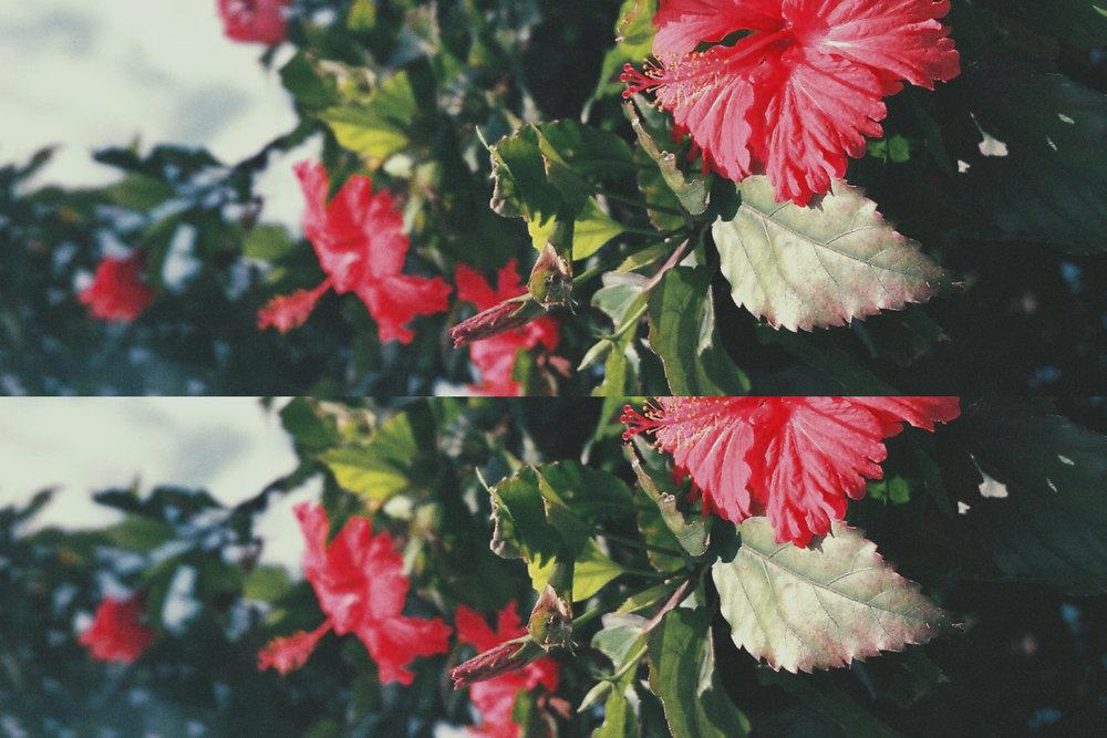 aloha dyno2.jpg