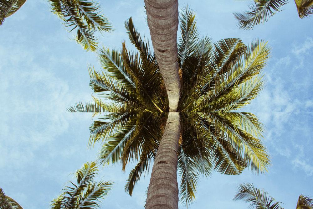 aloha dyno6.jpg