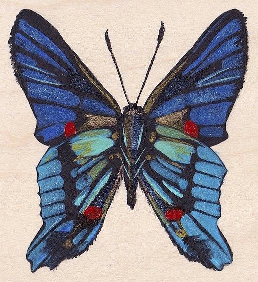 butterfly copy_Fotor.jpg