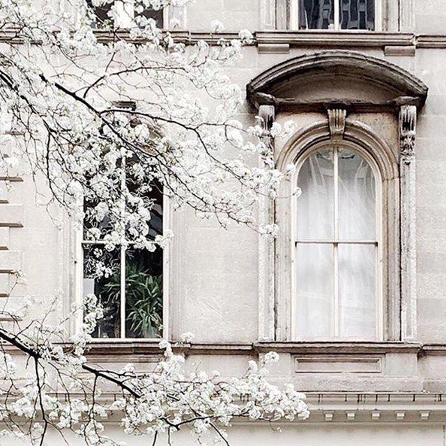 Nothing more beautiful than delicate fluffy blossoms! Missing the prettiness of spring, but the autumn sunsets have been pretty magical of late x  Gorgeous photo @nicholerobertson via @alexandragrecco