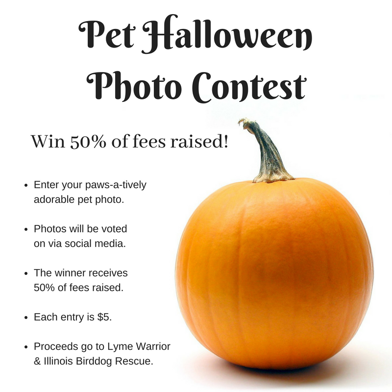 Pet Halloween Photo Contest