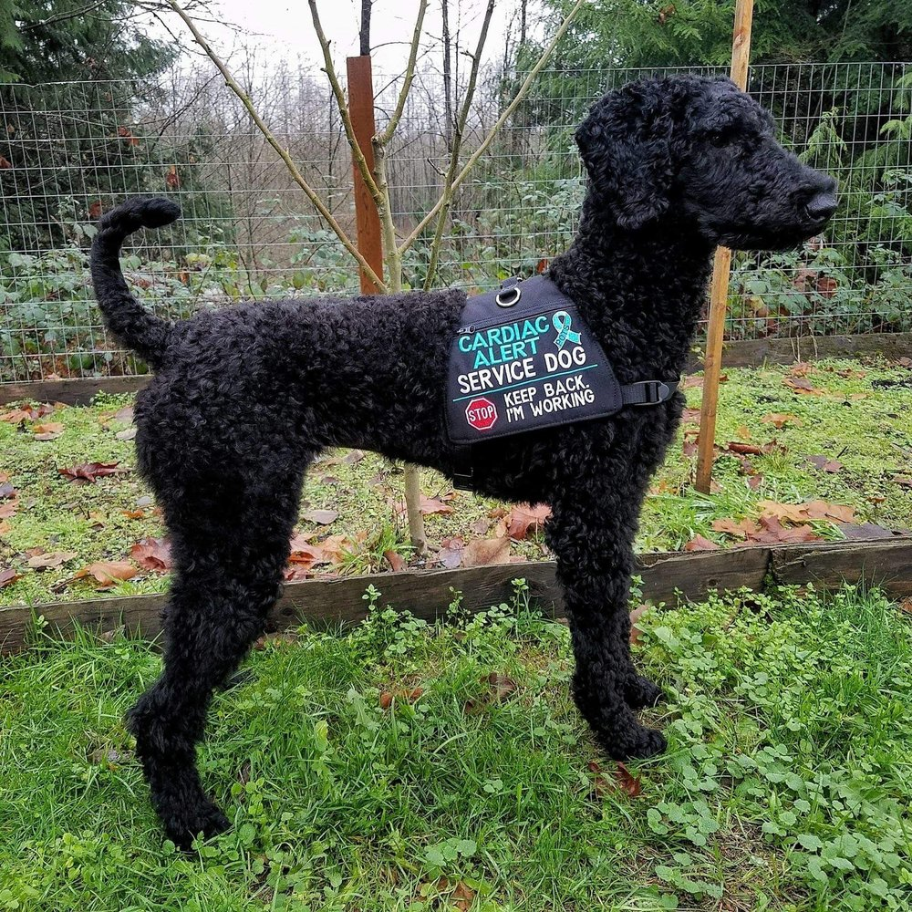 Service Dog for Lyme