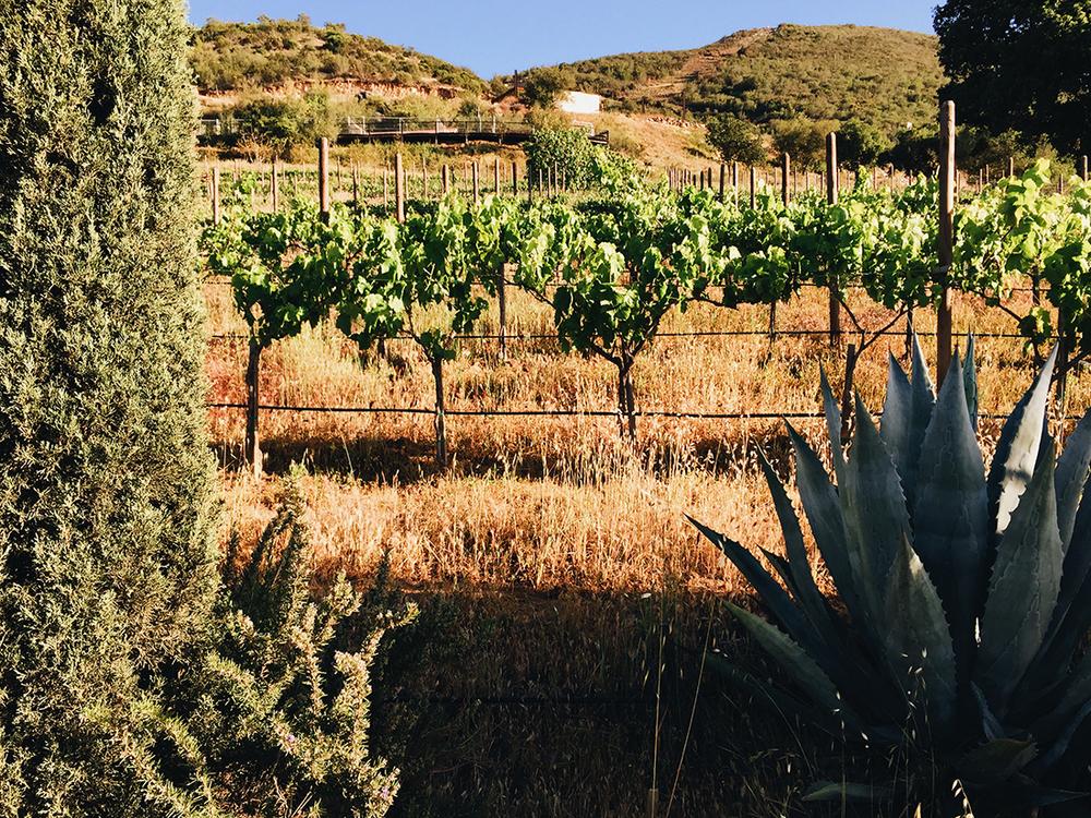 valledeguadalupe-malva-11-©lifeandfood.jpg