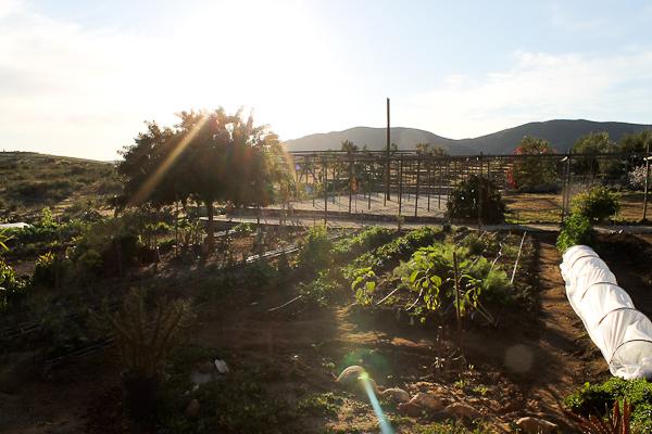 Corazon de Tierra in Valle de Guadalupe